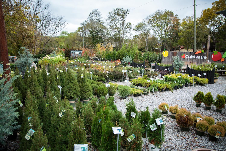 Season's Greenings: Springtime lawn & garden tips